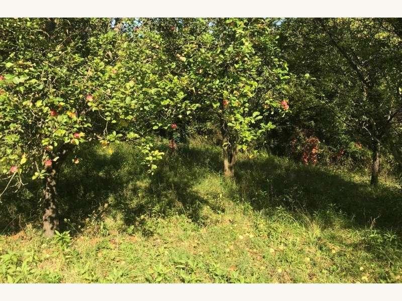 Pflück einen Apfel